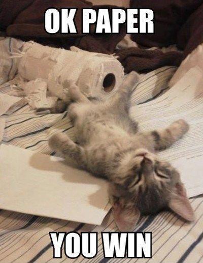 Paper_cat_image