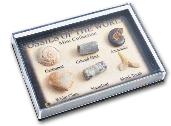 pk245_mini_fossil_chart_box.jpg